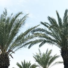 Free Photo Of Palm Leaves Royalty Free Stock Images - 117917429