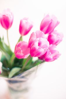 Free Selective Focus Photography Of Pink Tulip Flowers Stock Photos - 117917443