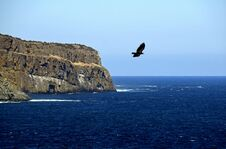 Free Flying Eagle Over The Ocean Near A Coastline Royalty Free Stock Photography - 117977077
