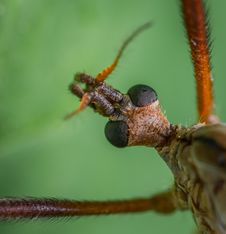 Free Macro Photography Of Insect Stock Photography - 117988872