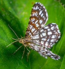 Free White And Brown Butterfly On Green Leaf Stock Photography - 117988892
