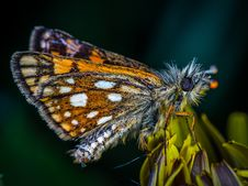 Free Macro Photo Of Butterfly Stock Photo - 117988920
