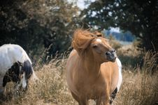 Free Brown And White Horses Royalty Free Stock Photography - 117989077