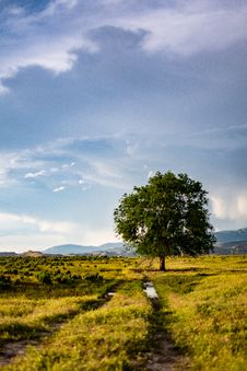 Free Green Leaf Tree In The Middle Of Green Grass Field Royalty Free Stock Image - 117989106