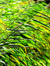 Free Reeds Stock Photography - 1183222