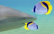 SharkHead Royalty Free Stock Photography