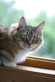 Cat-girl Royalty Free Stock Image