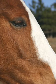 Close Up Of Horse Head Royalty Free Stock Images