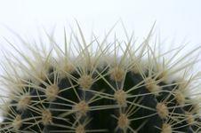 Free Cactus Royalty Free Stock Image - 1188696