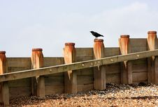 Crow On Breakwater Stock Images