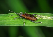 Free Brown And Black Bug Stock Photography - 118041832