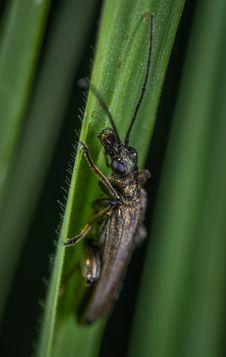 Free Black Bug Royalty Free Stock Image - 118041836