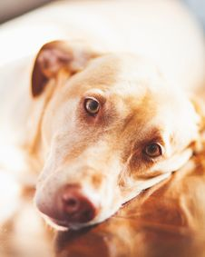 Free Animal, Photography, Canine Royalty Free Stock Photography - 118112187