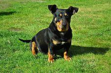 Free Dog, Dog Like Mammal, Dog Breed, Mammal Stock Photography - 118153982