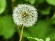 Free Flower, Dandelion, Flora, Plant Stock Photo - 118154070