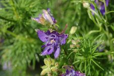 Free Flora, Plant, Flower, Bellflower Family Stock Photography - 118154272