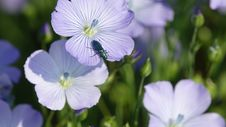 Free Flower, Blue, Flora, Wildflower Royalty Free Stock Images - 118154469