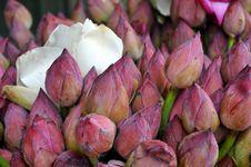 Free Flower, Pink, Plant, Bud Stock Image - 118154481