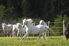 Free Horse, Pasture, Grassland, Horse Like Mammal Royalty Free Stock Image - 118155116