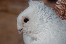 Free Beak, Bird, Fauna, Parrot Royalty Free Stock Image - 118155186