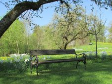 Free Nature Reserve, Tree, Bench, Grass Royalty Free Stock Photos - 118155228