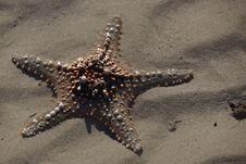 Free Starfish, Marine Invertebrates, Invertebrate, Echinoderm Stock Images - 118155504