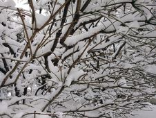 Free Snow, Branch, Winter, Black And White Stock Image - 118156081