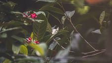 Free Green Leaves And Red Flowers Royalty Free Stock Image - 118221526