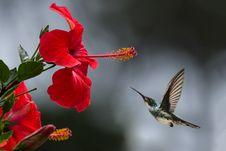 Free Brown Hummingbird Selective Focus Photography Stock Photo - 118221590
