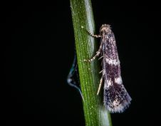 Free Macro Photo Of White And Black Tree Hopper On Green Stem Stock Images - 118221794