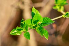 Branch With Young Leaves Stock Image