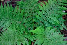 Fern In The Forest Stock Image
