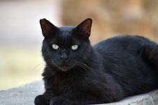 Free Cat, Black Cat, Black, Mammal Stock Photo - 118241520