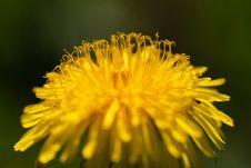 Free Flower, Yellow, Dandelion, Sow Thistles Stock Photos - 118241883