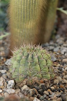 Free Plant, Cactus, Vegetation, Thorns Spines And Prickles Royalty Free Stock Image - 118241926