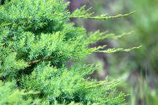 Free Tree, Vegetation, Plant, Conifer Royalty Free Stock Image - 118241986