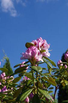 Free Flower, Sky, Plant, Purple Stock Photo - 118242100