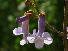 Free Flora, Plant, Flower, Bellflower Family Royalty Free Stock Image - 118242226