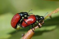 Free Insect, Beetle, Macro Photography, Leaf Beetle Stock Image - 118242321