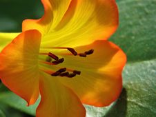 Free Flower, Yellow, Flora, Orange Stock Photos - 118242483