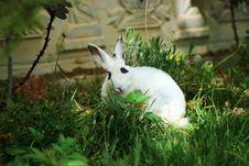 Free Fauna, Rabbit, Domestic Rabbit, Grass Royalty Free Stock Image - 118242736