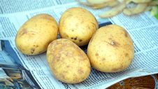 Free Root Vegetable, Potato, Food, Yukon Gold Potato Stock Image - 118242751