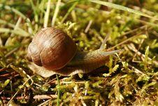 Free Snails And Slugs, Snail, Molluscs, Terrestrial Animal Stock Photography - 118242812