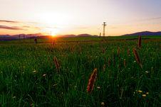 Free Field, Ecosystem, Grassland, Prairie Stock Photography - 118242892