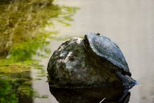 Free Water, Turtle, Common Snapping Turtle, Emydidae Stock Photo - 118242950