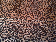 Free Mammal, Leopard, Pattern, Carnivoran Royalty Free Stock Photo - 118242955