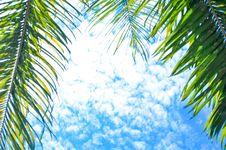Free Blue, Sky, Tree, Branch Stock Image - 118242991