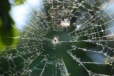 Free Spider Web, Water, Moisture, Biome Stock Image - 118243001