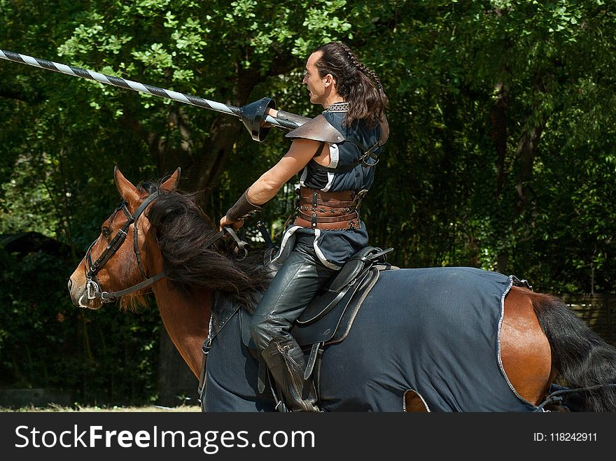 Horse, Horse Like Mammal, Bridle, Horse Harness