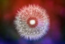 Free Close-up Photography Of Dandelion Stock Photography - 118290542
